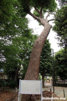 伊弉諾神社(市川市堀之内)14