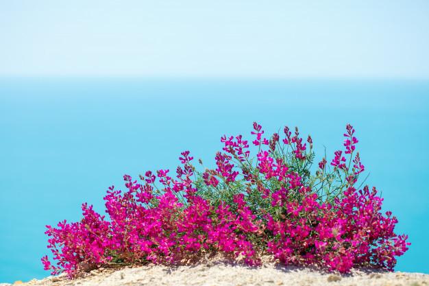 beautiful-flowers-against-sea_99293-158.jpg