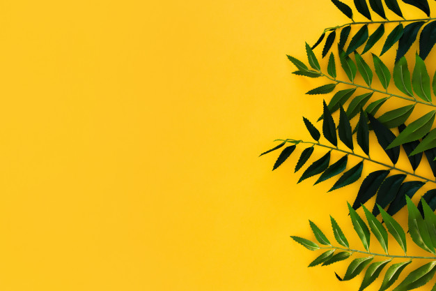 border-green-leaves-yellow-with-copyspace_24972-499.jpg