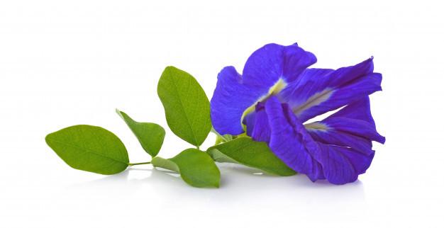 clitoria-ternatea-aparajita-flower-isolated-white-background_62678-502.jpg