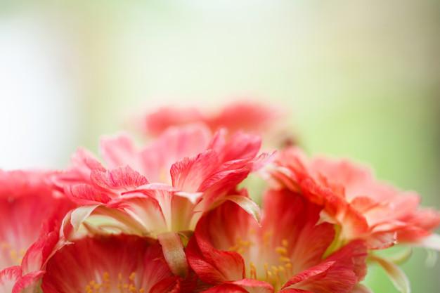 closeup-beautiful-red-lobivia-cactus-flower-nature_33996-921.jpg