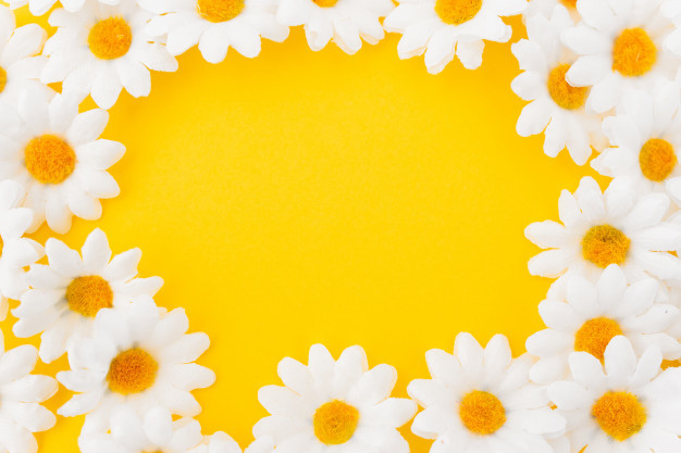 composition-circle-daisies-yellow-background_24972-312.jpg