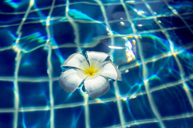 floating-frangipani-flowers-pool_93675-26857.jpg