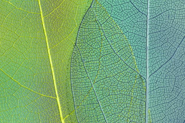 green-blue-transparent-leaves_23-2148239758.jpg