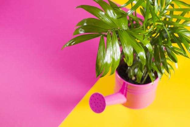 green-plant-watering-pot_23-2147752449.jpg