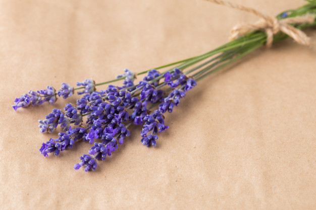 lavender-bunch-paper_93675-17026.jpg