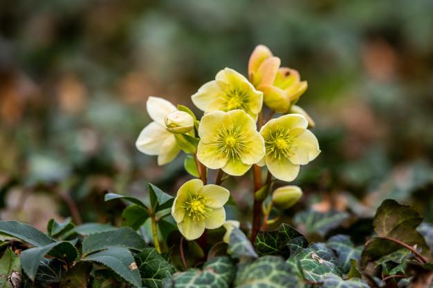 plant-flower-blossom_109663-58.jpg
