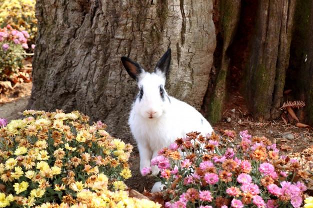 rabbits-flower-garden_41338-5167.jpg