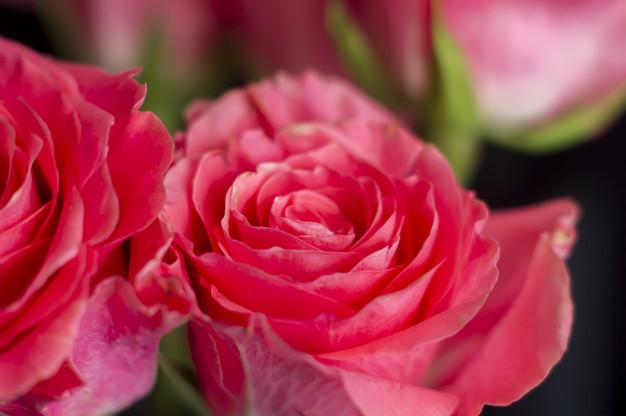 roses-black-background_105596-162.jpg