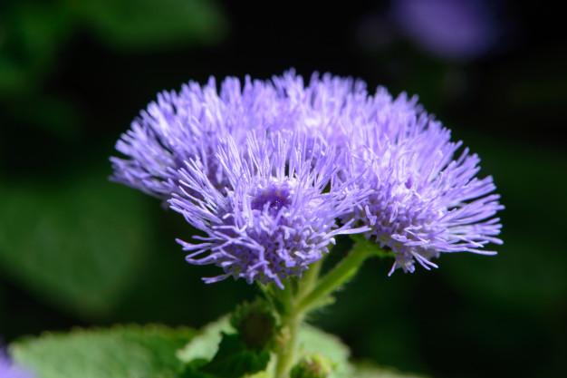small-lilac-flowers-garden_90251-151.jpg