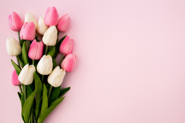 tulips-bouquet-pink-background-with-copyspace_24972-271.jpg