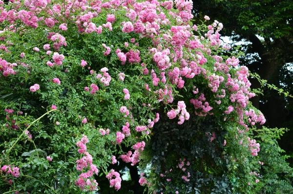 イギリス 花と器12