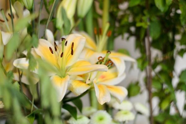 エリスマン 花と器6