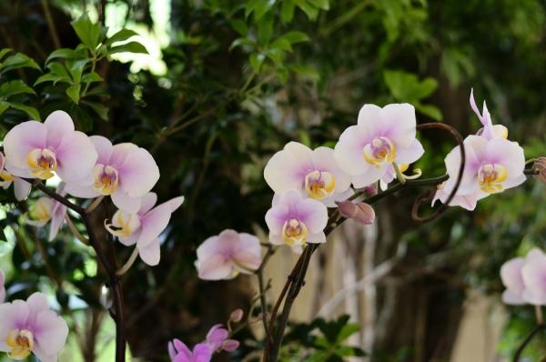 ベーリック 花と器10