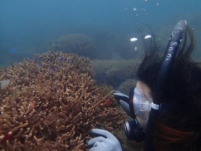2019830体験ダイビング海底少年_190830_0013