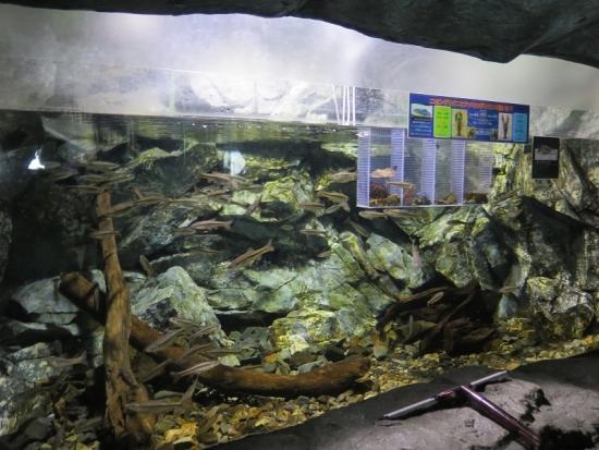 大洗水族館 上流の自然