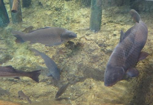 大洗水族館 中流の自然
