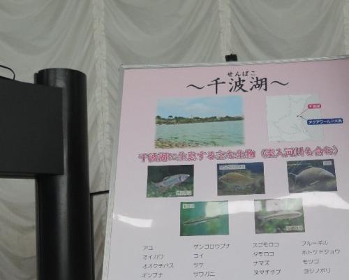 大洗水族館 仙波湖