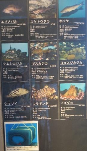大洗水族館 北海道の海