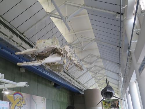 大洗水族館 クジラ