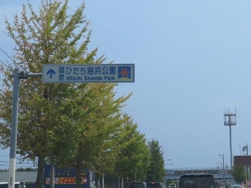 ひたち海浜公園→