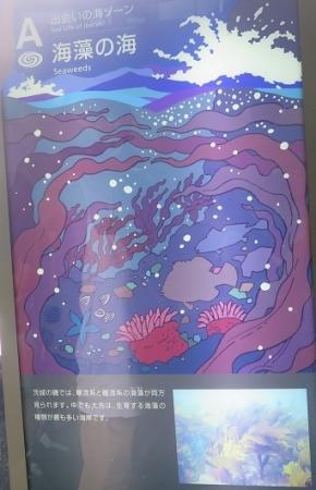 大洗アクアワールド 海藻の海