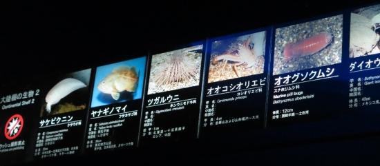 大洗水族館 大陸棚の生物