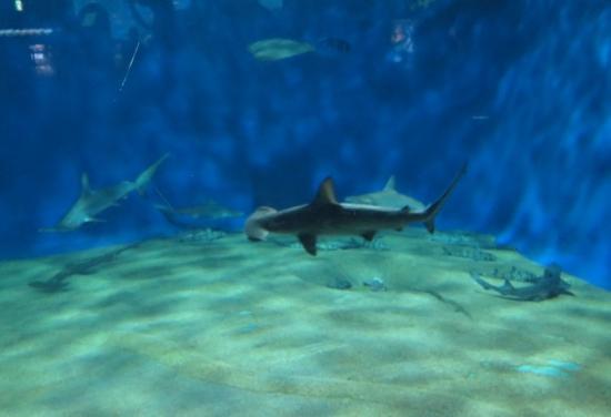 大洗水族館 サメの海