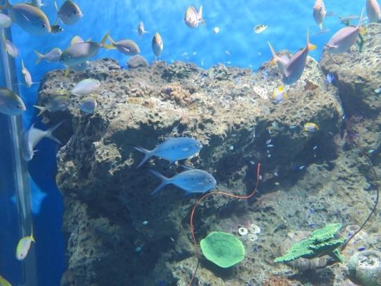 アクアワールド大洗 沖縄の海