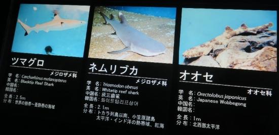 アクアワールド大洗 世界のサメ