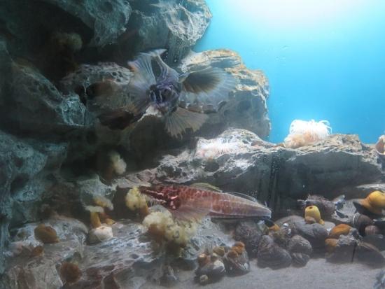 アクアワールド大洗 オホーツクの海 トクビレ