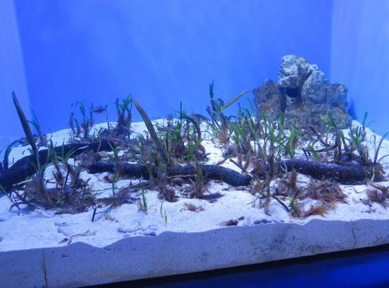 アクアワールド大洗 オホーツクの海 海草