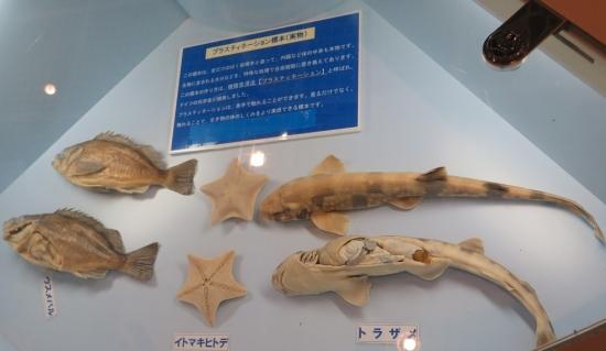 大洗水族館 プラスティネーション標本