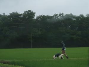 田んぼで散歩