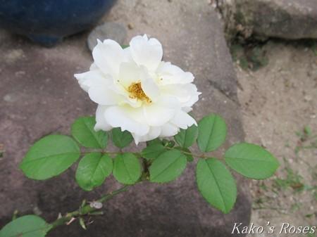 s-IMG_1726kako.jpg