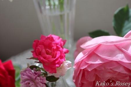 s-IMG_3483kako.jpg