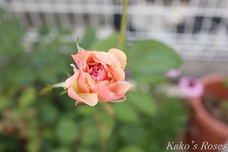 s-IMG_3502kako.jpg