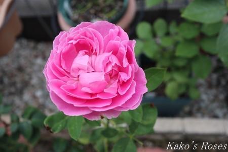 s-IMG_3509kako.jpg