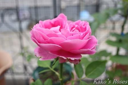 s-IMG_3510kako.jpg