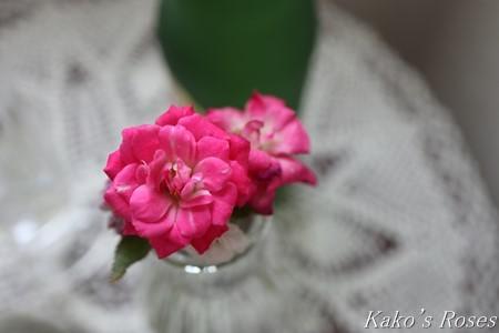 s-IMG_3519kako.jpg