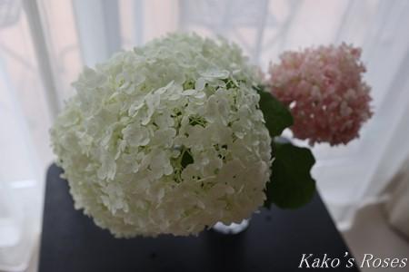 s-IMG_3527kako.jpg