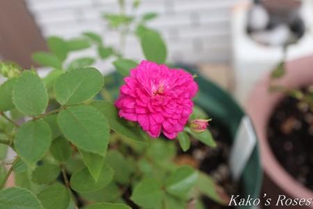 s-IMG_3544kako.jpg