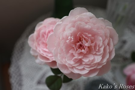 s-IMG_3549kako.jpg