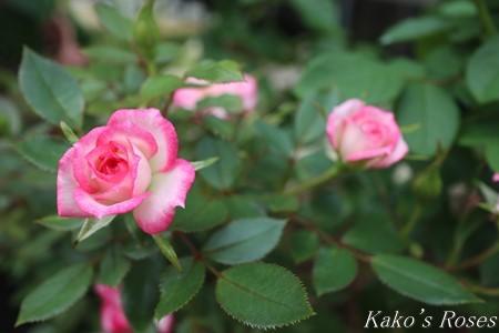 s-IMG_3553kako.jpg