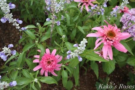 s-IMG_3559kako.jpg