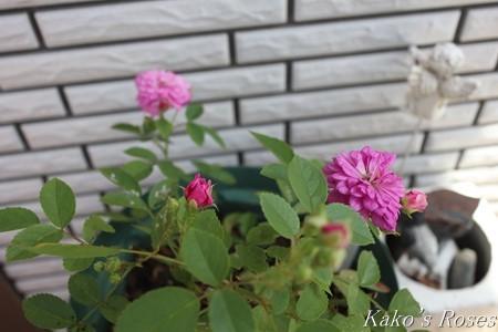s-IMG_3582kako.jpg