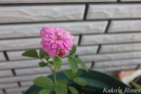 s-IMG_3583kako.jpg