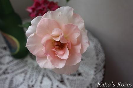 s-IMG_3589kako.jpg