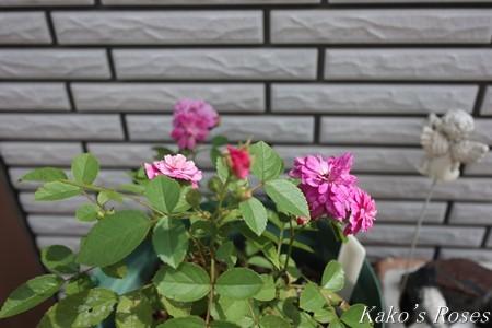 s-IMG_3598kako.jpg