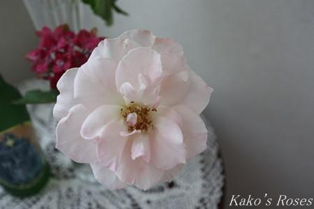 s-IMG_3618kako.jpg